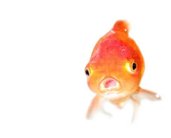 goldfish-sales-prospecting