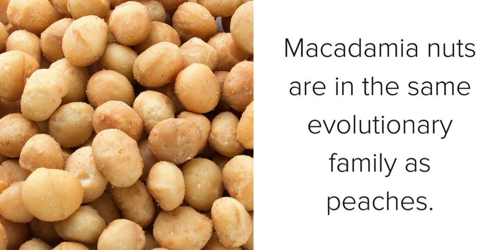 macadamia-nuts-experiment